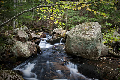 Photograph - Creek In Acadia Np Maine Img 6379 by Greg Kluempers