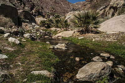 Photograph - Creek In Palm Canyon 2 by Lee Kirchhevel