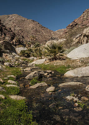 Photograph - Creek In Palm Canyon by Lee Kirchhevel