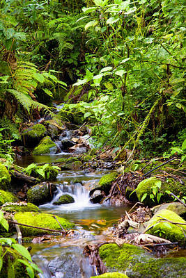Photograph - Creek In Rainforest by Alexey Stiop