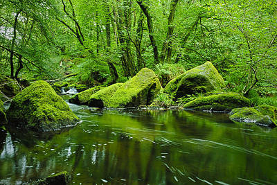 Photograph - Creek In The Woods by Chevy Fleet