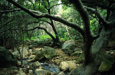 Creek In Woods Art Print