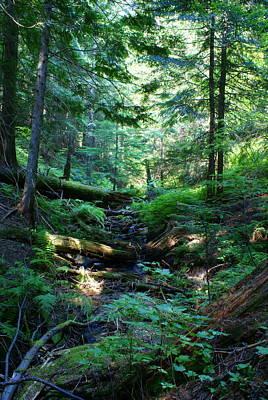 Photograph - Creek On Mt. Spokane by Ben Upham III