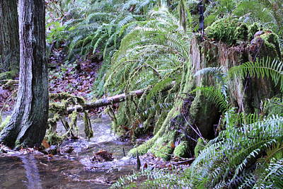 Photograph - Creek Running Through The Forest by Donald Torgerson