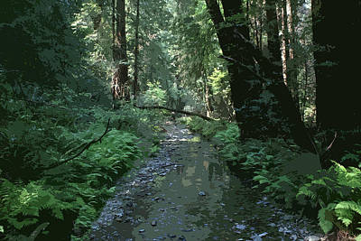 Photograph - Creek Scene At Muir Woods by Ben Upham III