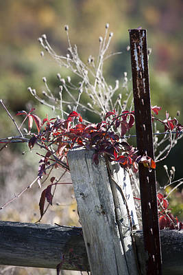 Tendrils Photograph - Creeper On Post by Teresa Mucha