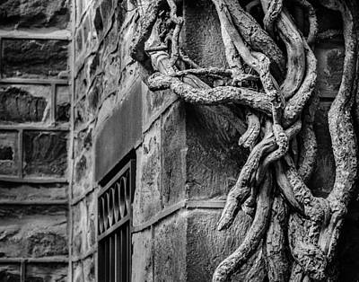 Photograph - Creeper by Steve Stanger