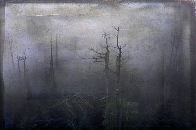 Photograph - Creepy Forest by Carol Erikson