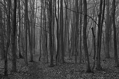 Photograph - Creepy Forest by Ivan Slosar
