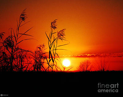 Photograph - Creole Trail Sunset by Lizi Beard-Ward