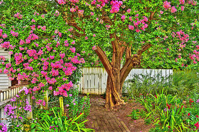 Art Print featuring the photograph Crepe Myrtle In Wiliamsburg Garden by Jerry Gammon