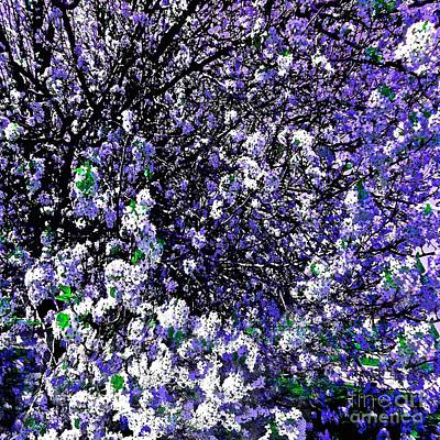 Photograph - Crepe Myrtle Tree Purple Lilac Spring by Saundra Myles
