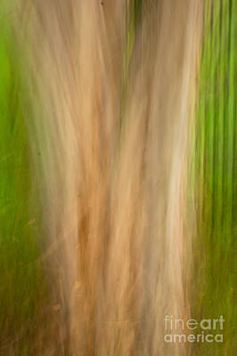 Photograph - Crepe Myrtle Trunk - Panned by Kathleen K Parker