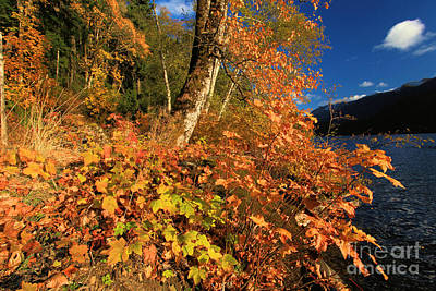 Photograph - Crescent Fall Colors by Adam Jewell
