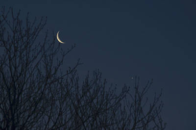 Photograph - Crescent Moon And Venus by Terry DeLuco