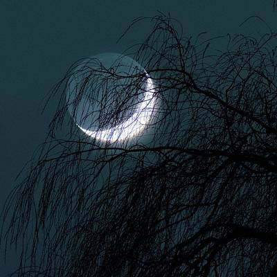 Crescent Moon Photograph - Crescent Moon Behind A Tree by Detlev Van Ravenswaay