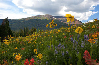 Photograph - Crested Butte Wildflowers by Susan Rovira