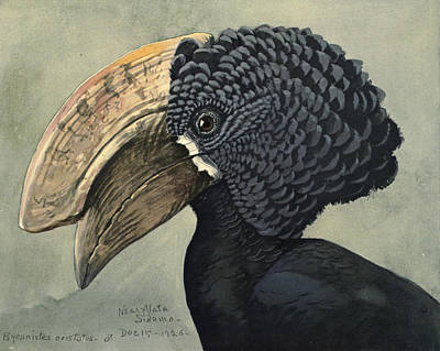 Hornbill Painting - Crested Hornbill by Dreyer Wildlife Print Collections
