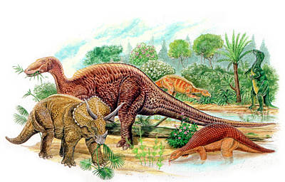 Animals Photograph - Cretaceous Herbivorous Dinosaurs by Deagostini/uig