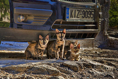 Photograph - Cretan Cats-1 by Casper Cammeraat