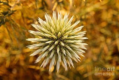Photograph - Cretan Flower by David Warrington