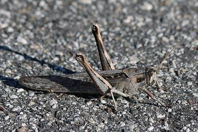 Photograph - Grasshopper  by Christy Pooschke
