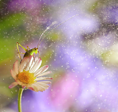 Insect Photograph - Cricket In Fantasy World- Ninfa by I Love Nature