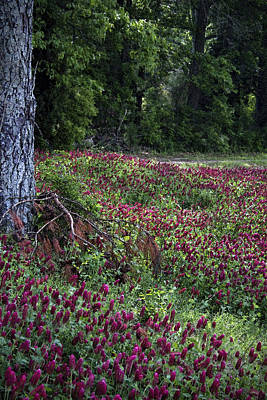 Crimson Clover Photograph - Crimson Clover All Over by Kathy Clark