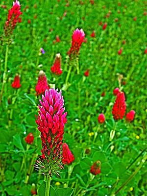 Crimson Clover At Mile 199 Of Natchez Trace Parkway-mississippi Art Print by Ruth Hager