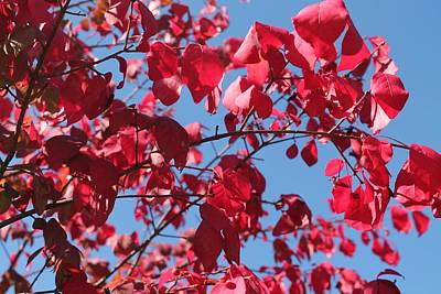 Photograph - Crimson Fall by Lesa Weller