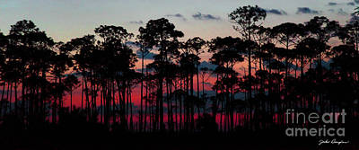 Photograph - Crimson In The Pines by John Douglas