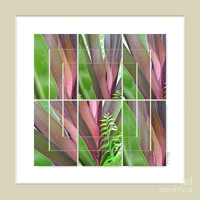 Photograph - Crinum Lily Collage1 by Darla Wood
