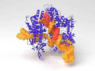 Biochemical Photograph - Crispr-cas9 Gene Editing Complex by Indigo Molecular Images