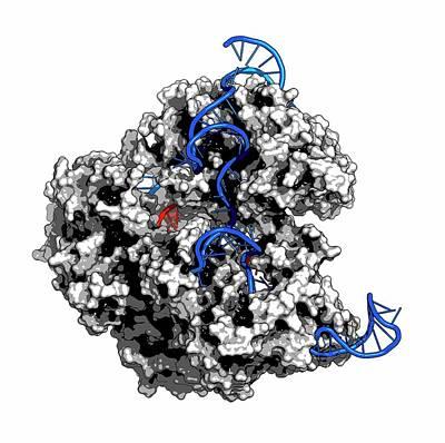 Polymer Photograph - Crispr-cas9 Gene Editing Complex by Molekuul