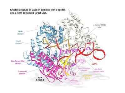 Crispr-cas9 Gene Editing Complex Art Print