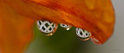 Photograph - Criss Cross Water Drop by Crystal Wightman