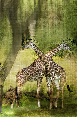 Criss Cross Art Print by Kathy Jennings