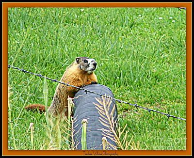 Photograph - Critter On The Loose by Bobbee Rickard