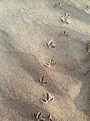 Photograph - Critter Tracks In The Sand by Gray  Artus