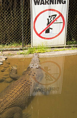 Photograph - Croc Rules by Debbie Cundy