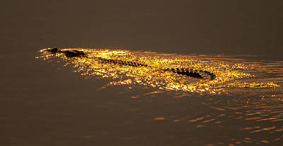 Photograph - Croclight 2 by Alistair Lyne