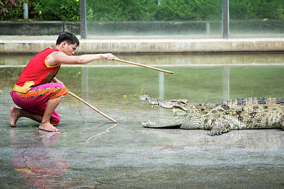 Crocodile Photograph - Crocodile Display by Pan Xunbin
