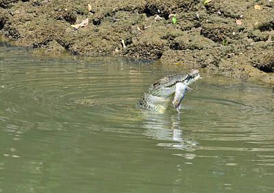 Photograph - Crocodile Feeding3 by Chua  ChinLeng