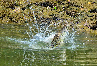 Photograph - Crocodile Feeding6 by Chua  ChinLeng