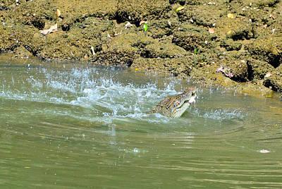 Photograph - Crocodile Feeding7 by Chua  ChinLeng