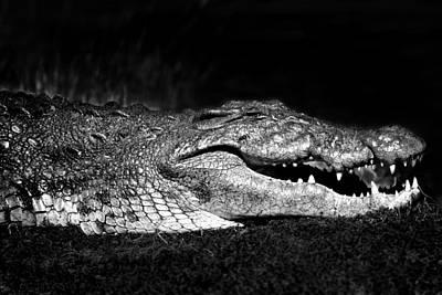 Photograph - Crocodile  by Gigi Ebert