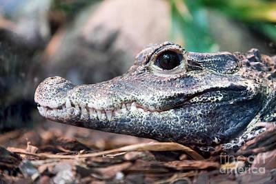 Danger Photograph - Crocodile Profile Portrait by Michal Bednarek