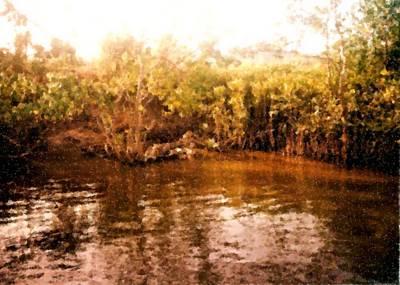 Digital Art - Crocodiles Paradise In The Daintree River by Asbjorn Lonvig
