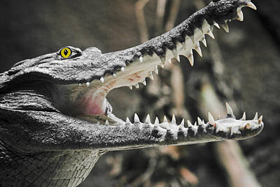 Photograph - Croc's Shiny Whites by Rich Collins