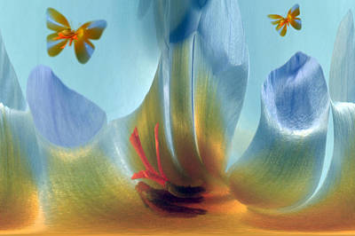 Photograph - Crocus Fantasy by Terence Davis